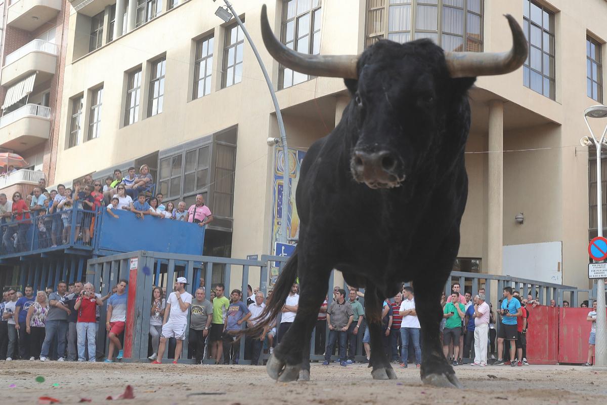 Un toro, en el recinto de Vila-real durante las fiestas locales.
