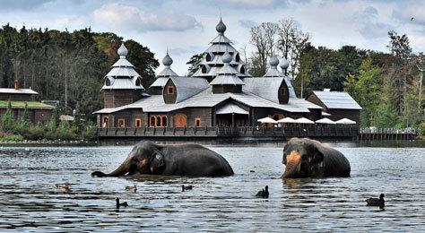 Los elefantes en el lago del nuevo hotel.