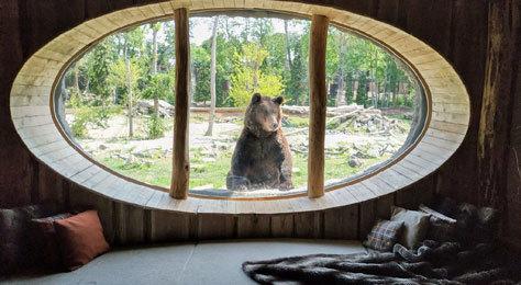 Un oso polar se asoma en una de las habitaciones.