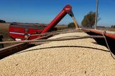 FILE PHOTO: Soybeans are loaded onto a truck at a field in the city of Chacabuco