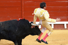 Spanish matador Enrique lt;HIT gt;Ponce lt;/HIT gt; is attacked by the bull after stabbing the sword to kill it during a bullfight at El Puerto de Santa Maria's bullring, on August 6, 2020. (Photo by CRISTINA QUICLER / AFP)
