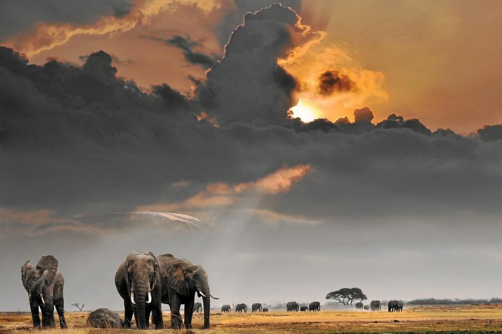 Una familia de elefantes con el  Kilimanjaro detrás.