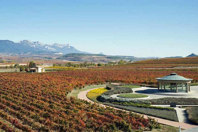 Cómo afrontan las bodegas de La Rioja la crisis del coronavirus