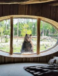 El original hotel-zoo en el que ves morsas y osos polares desde tu cama