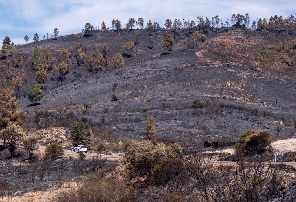 Monte quemado en el termino de Zalamea la Real en el incendio del año pasado iniciado en Almonaster.