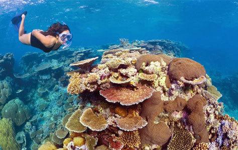 Inmersión en la Gran Barrera del Coral.
