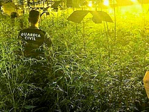 La red del zapatero chino ejecutado que manda esclavos a las plantaciones de marihuana en España
