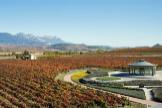 Cómo afrontan las bodegas de La Rioja el impacto del coronavirus