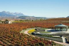 Las viñas de la bodega Vivanco, en Briones.