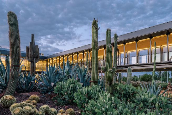 La ruta de los cactus por el mundo en 10 espinosos destinos