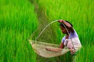 Una mujer india pesca en Guwahati (Assam).