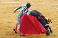 Lorenzo con el toro de Garcigrande al que cortó las dos orejas