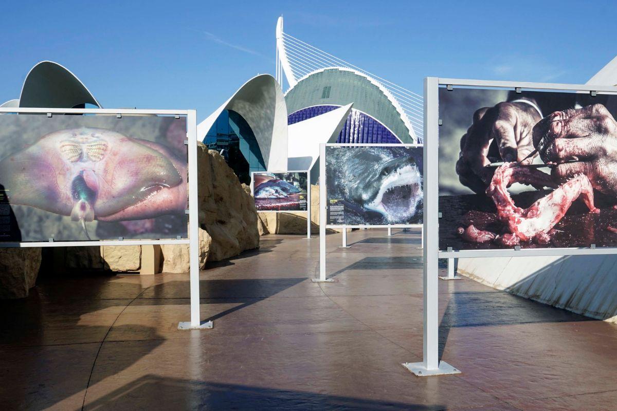 Exposición SOS Tiburones en el Oceanogràfic de Valencia.