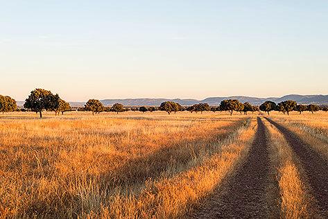 Cabañeros, con 42.000 hectáreas, es conocido como el Serengueti español.