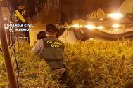 La plantación intervenida por la Guardia Civil de Alicante.
