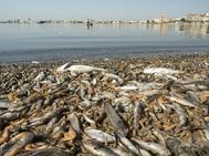 El Mar Menor un año después de la tragedia: el 'enfermo crónico' teme otra gota fría letal