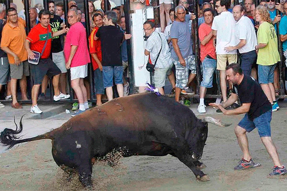 Una exhibición de 'bous al carrer' en Castellón.