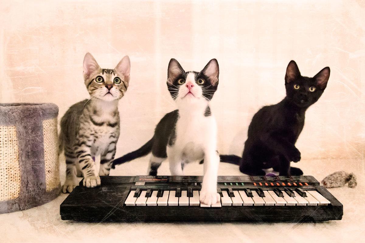 Luka, Kai y Dako.