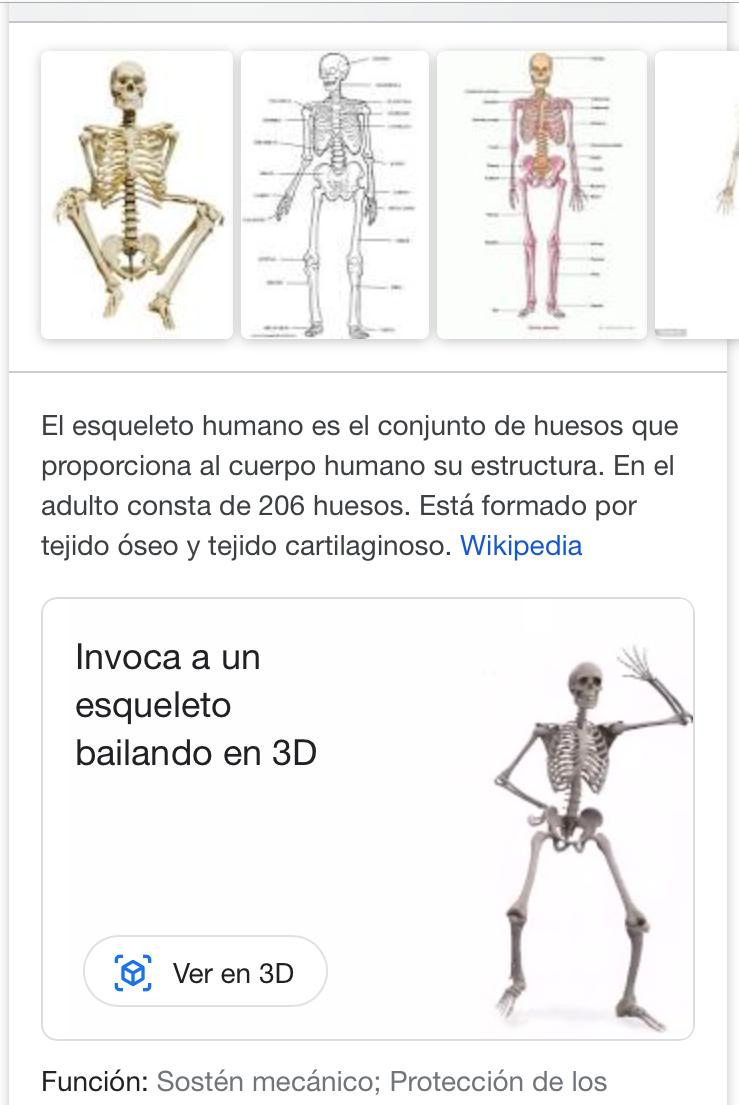 Muestra del esqueleto humano en el buscador de Google