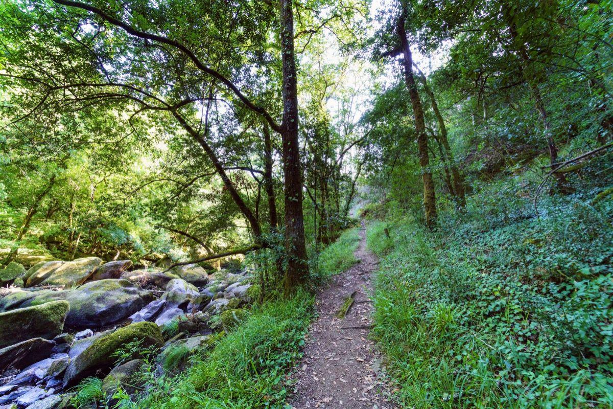 Bosques del Área Natural de Chelo, en Coirós, La Coruña.