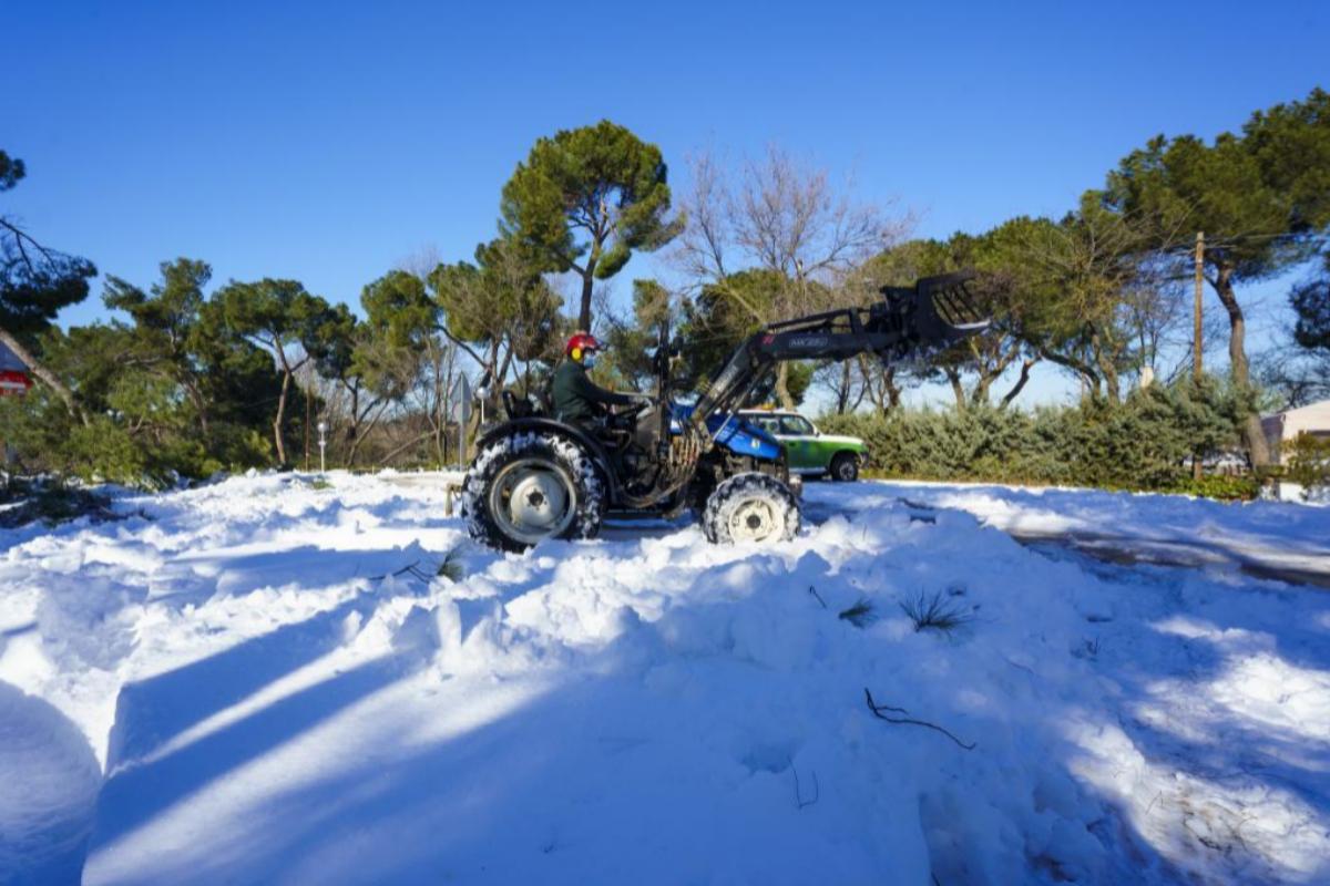 Un operario retira árboles caídos en la Casa de Campo