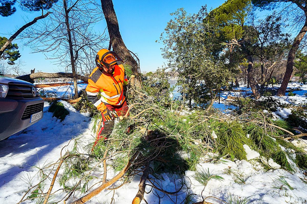 Operarios retiran árboles caídos en la Casa de Campo