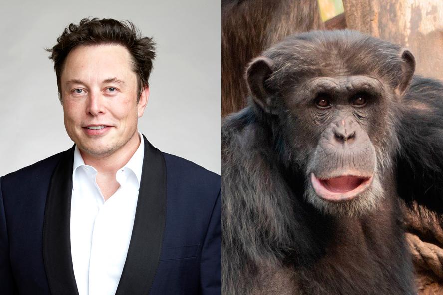 El empresario presume de que Neuralink está funcionando con éxito en monos.