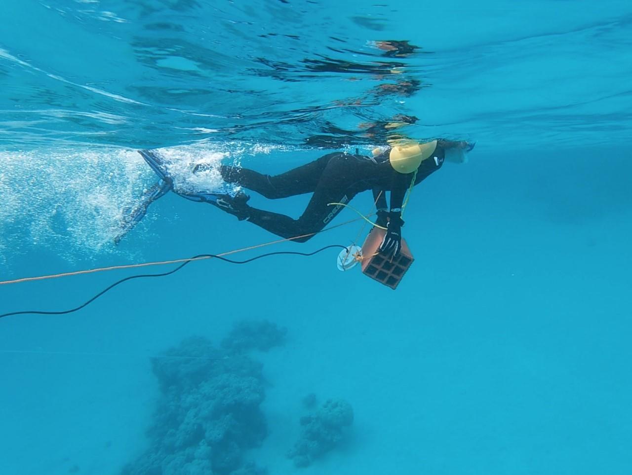 Michelle Havlik bucea en el Mar Rojo durante una expedición para grabar sonidos