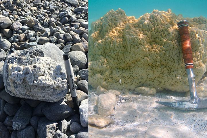 Microbialitas antiguas (izda) y nuevas en el lago Salda.