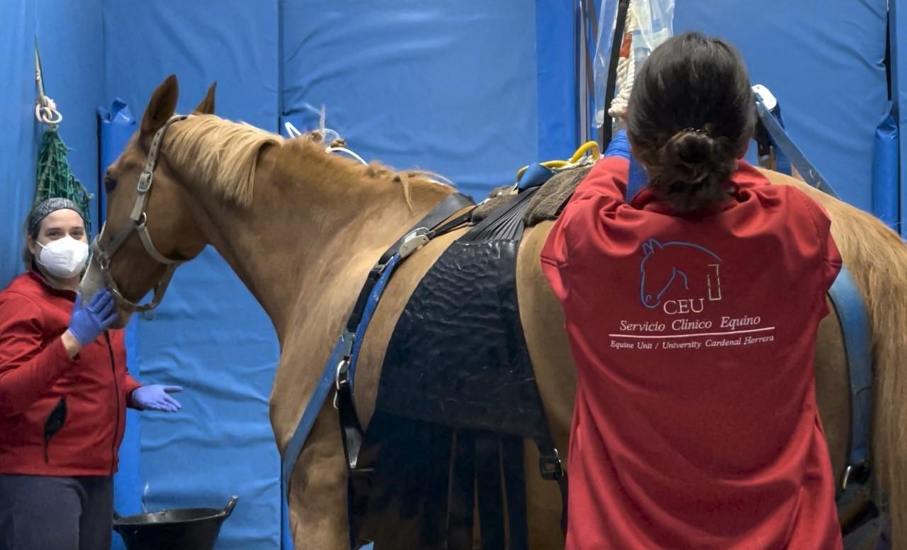 Dos veterinarias atienden a un caballo en Valencia