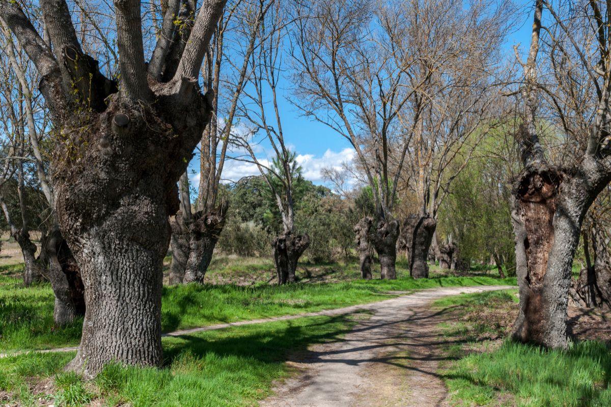 Senda fluvial del Manzanares por El Pardo.