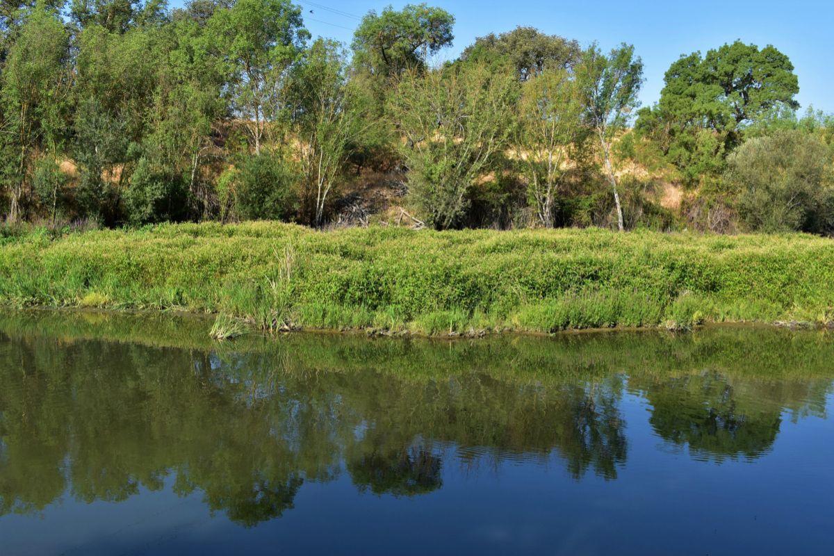 El río Manzanares a su paso por El Pardo.