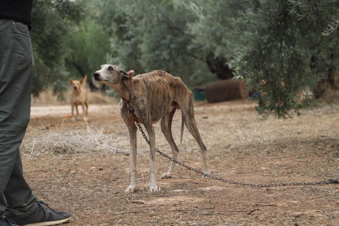 """Parlamentarios europeos alertan del """"maltrato"""" y """"abandono"""" de los perros de caza en España"""