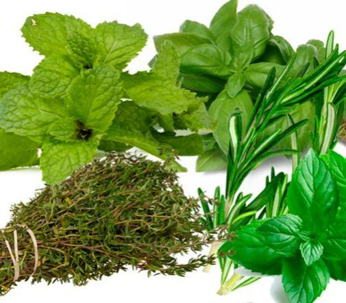 Pack de 24 plantas aromáticas: 6 albahaca, 6 menta, 6 tomillo y 6 romero (18, 79 ¤), de Leroy Merlin.