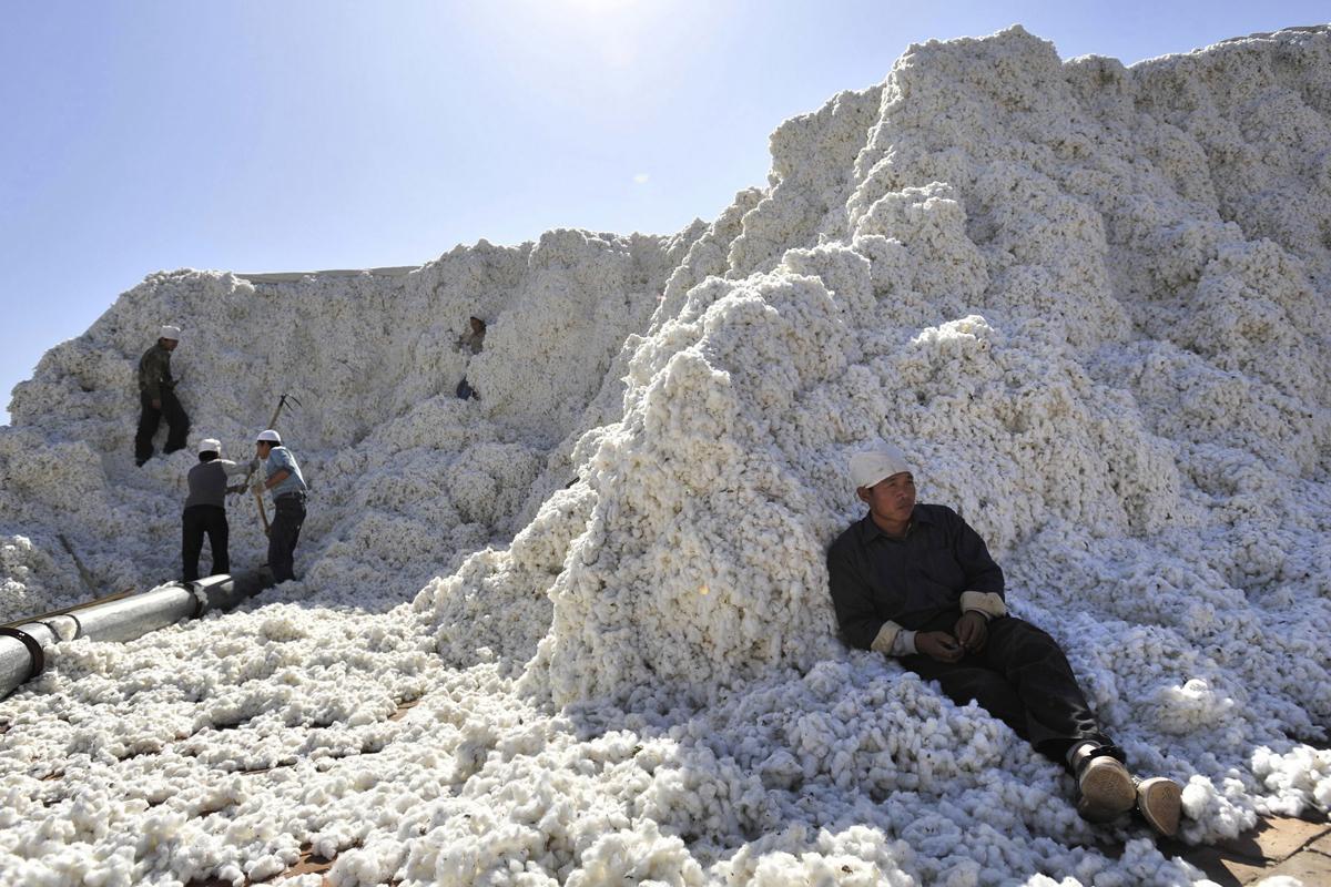 Recolectores de algodón en Xinjiang.