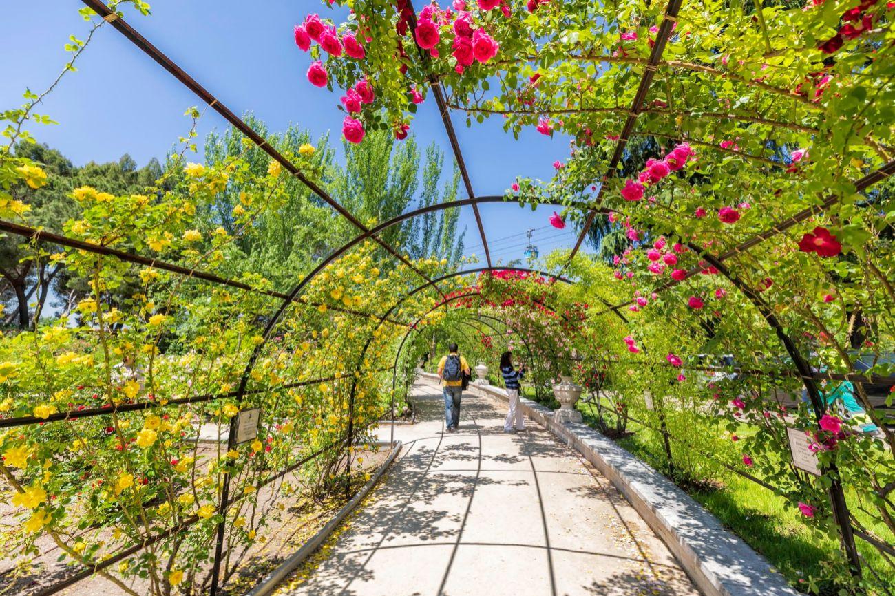 El Jardín de La Rosaleda