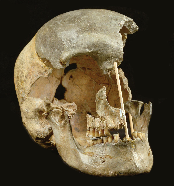El cráneo femenino encontrado en Zlatý kun
