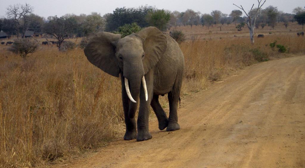 Un elefante.