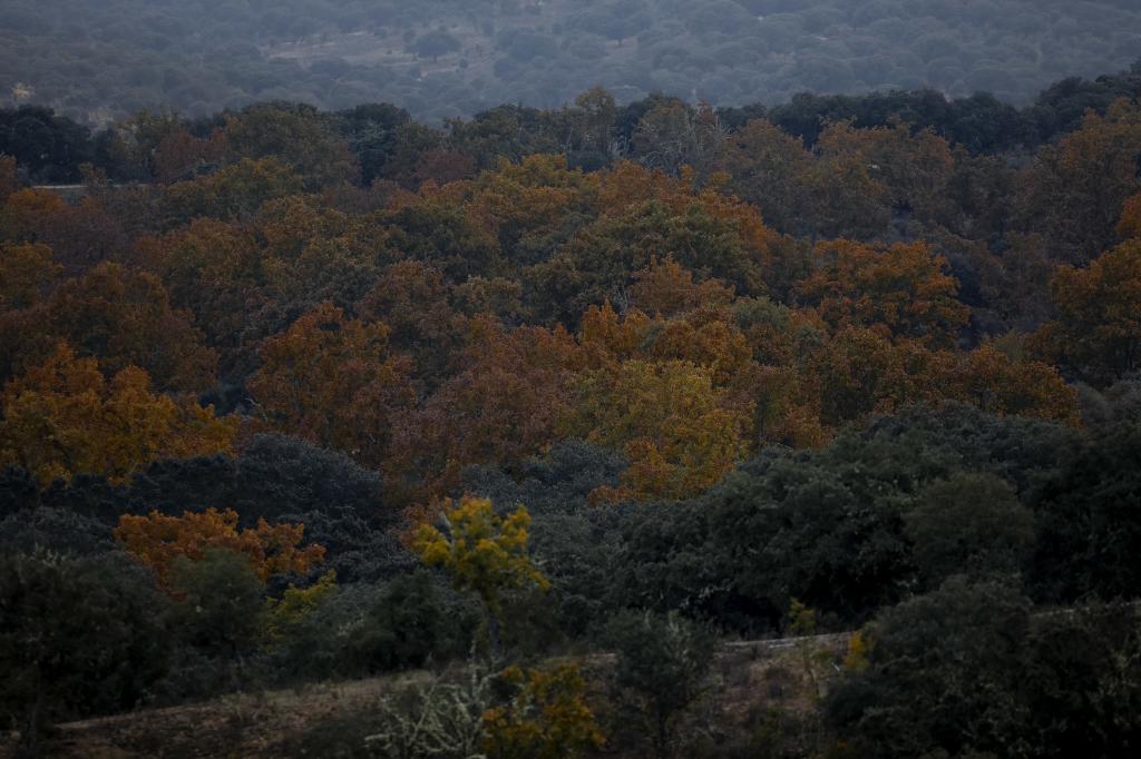 Bosque mixto en Castilla y León.