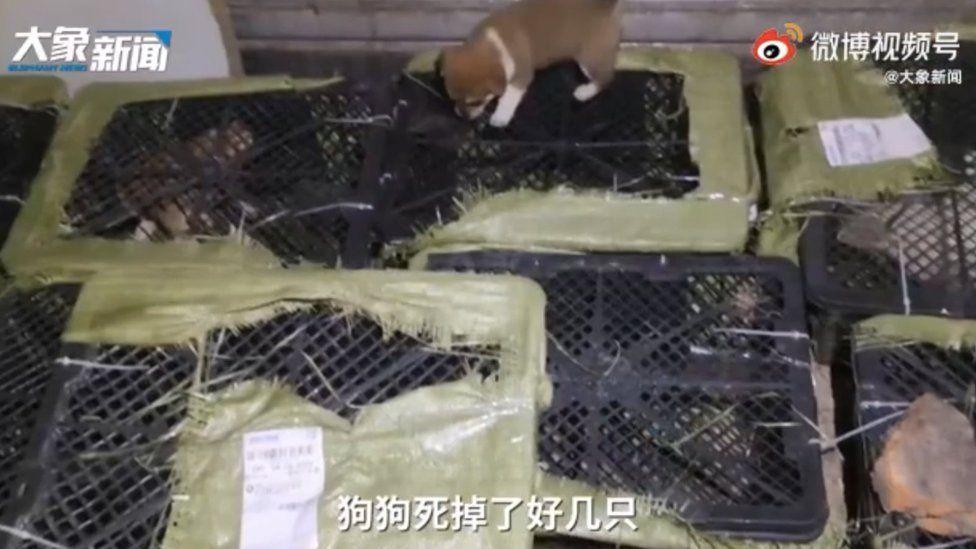 Cajas sorpresa con cachorros dentro en China.