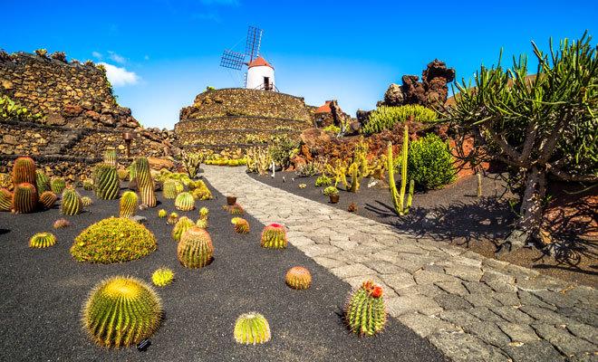 Jardín de cactus en Guatiza, Lanzarote.