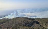 Columnas de humo cubren un área forestal del municipio de Arico (Tenerife)
