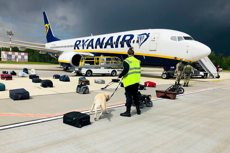 Bielorrusia. Perros inspeccionan el vuelo de Rynair donde volaba Roman Protasevich, detenido por el régimen de Lukashenko