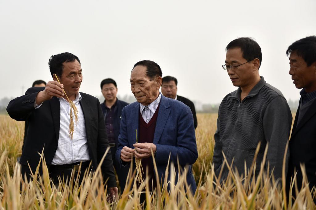 Imagen de archivo de Yuan Longping, en el centro, en un campo de arroz híbrido.