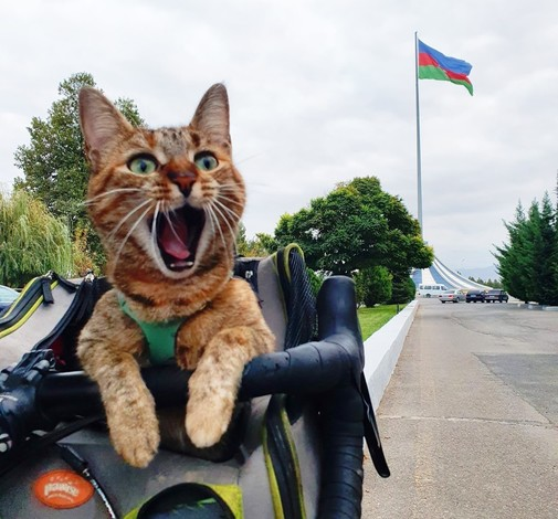 """""""¿Ya hemos llegado?"""", pregunta Nala al ver la frontera de Azerbaiyán."""