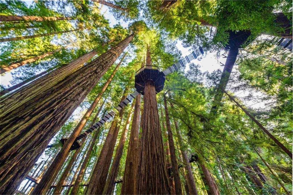 El visitantes puede ver el bosque a 30 metros de altura.