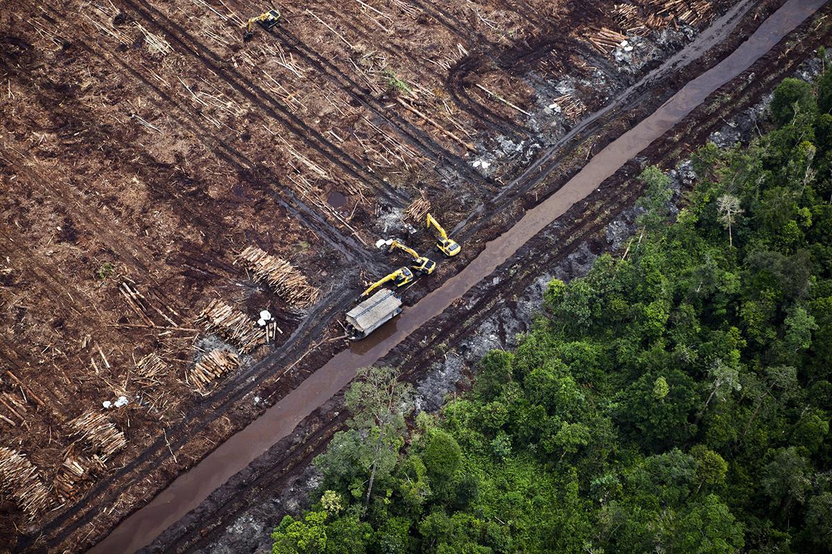 Deforestación en Indonesia.