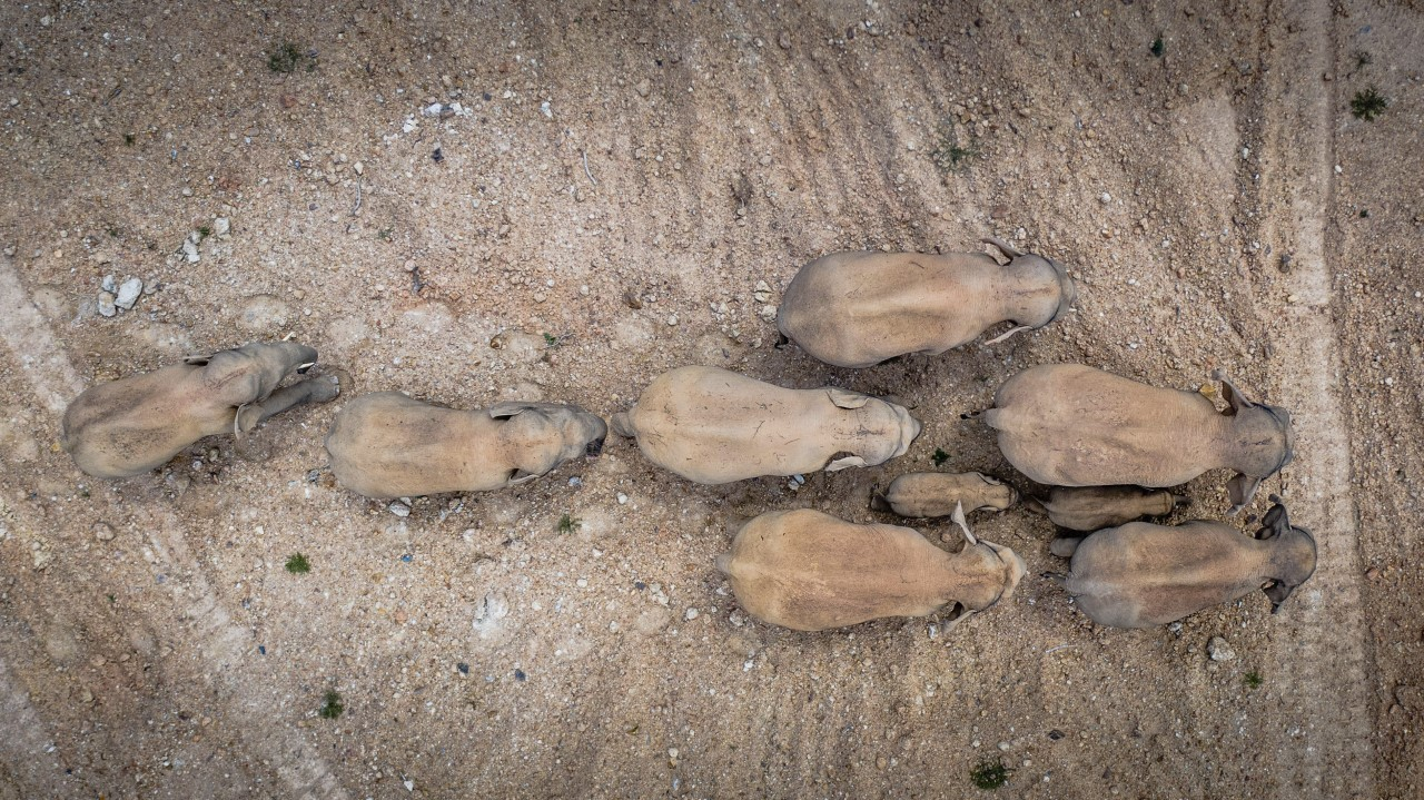 Foto aérea de los elefantes tomada el 28 de mayo en la provincia de Yunnan