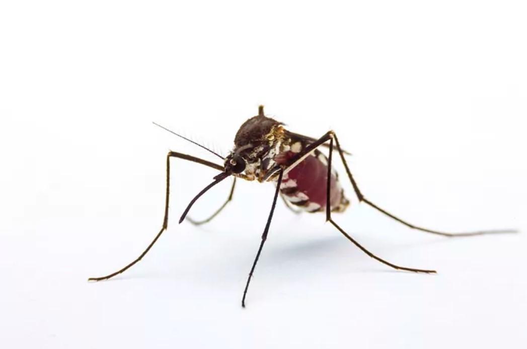 La Agencia Española de Medicamentos aconseja evitar el uso excesivo de pulseras repelentes de insectos