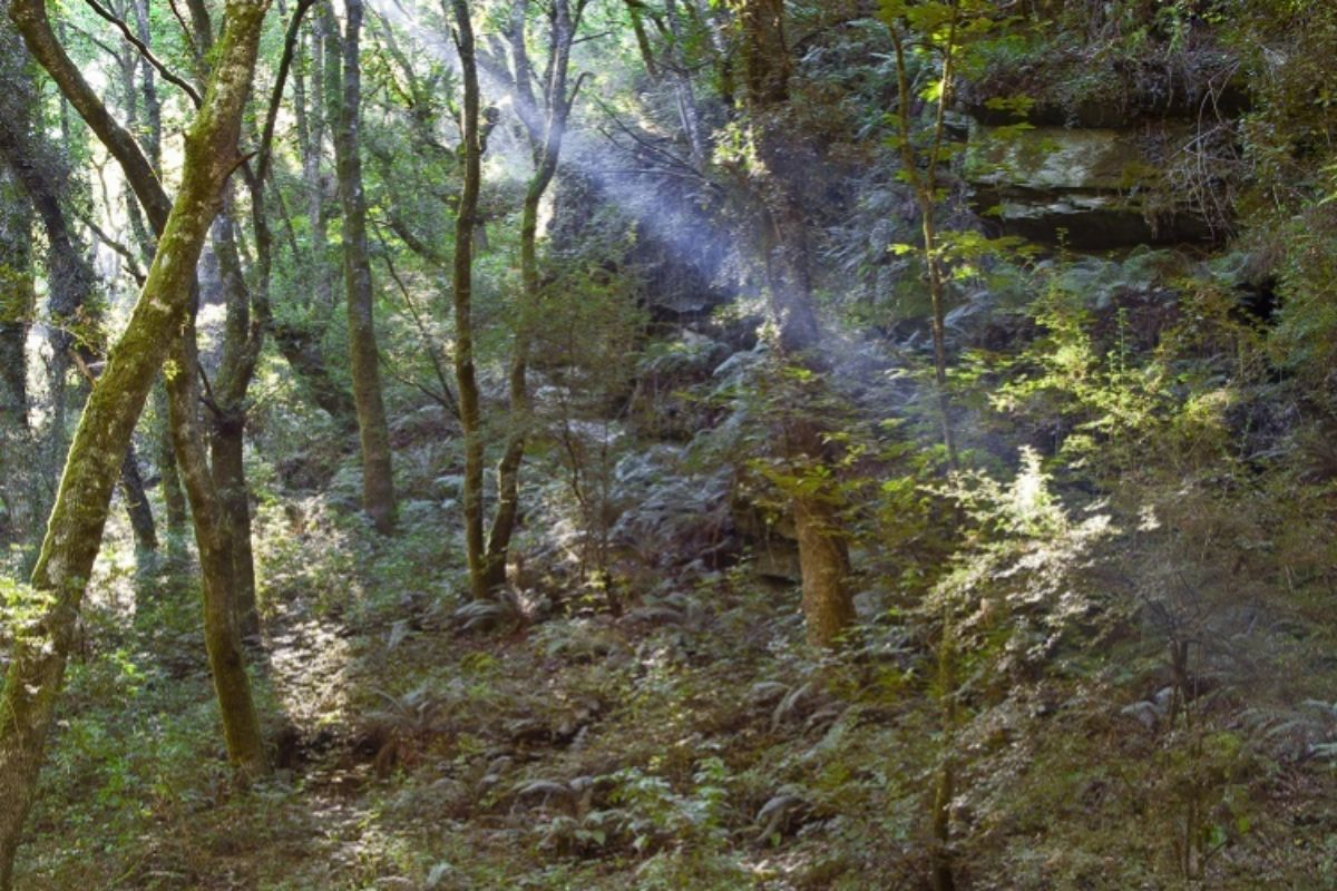 Bosques de Sarria.